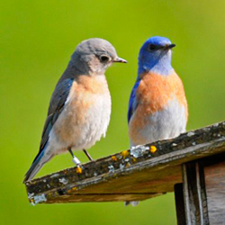 Send us a picture of your Bluebird House!